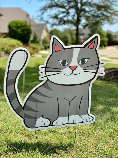 A grey and white cat